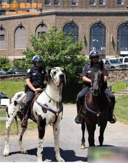 骑大狗的警察 搞笑图片 2b搞笑图片站